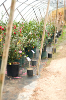 Brookhaven Nurseries